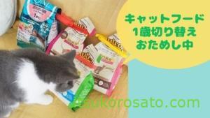 キャットフード 子猫から1歳のフード切り替え体験談【猫飼い初心者】