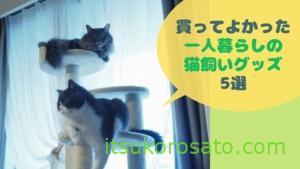 買ってよかった一人暮らしの猫グッズ5選