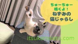 ねずみのじゃらしで猫の運動不足解消!? おすすめ猫じゃらし【猫飼い初心者】