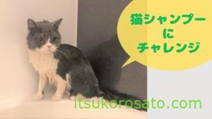 猫のシャンプーに挑戦