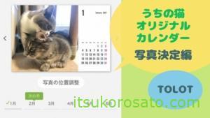 2021猫カレンダー写真決定デス! 「TOLOT」でオリジナル卓上カレンダーづくり
