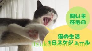 猫の1日生活スケジュール【飼い主在宅勤務日ver】
