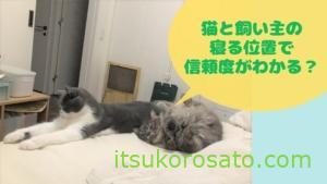 猫カイロで暖をとる-猫の寝る位置で信頼度が違う?-