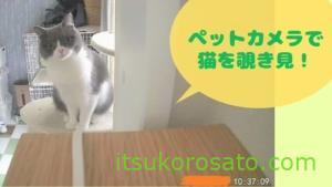 ペットカメラで留守中の猫がどれぐらい覗き見できるのか