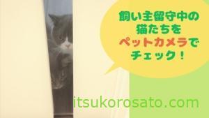 飼い主留守中の猫の様子を、ペットカメラで覗き見です。【猫スケジュール留守ver】