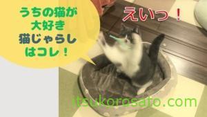 猫が飛び回る!我が家で人気の猫じゃらしBEST3(2020年晩秋)
