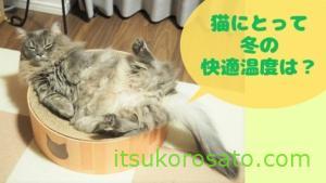 冬・猫の快適温度はどれぐらい? コロは23℃でへそ天に!