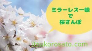 ミラーレス一眼で桜撮り散歩するだけで幸せな2021春