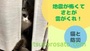 【猫と防災】留守中の地震で雲隠れしたさと